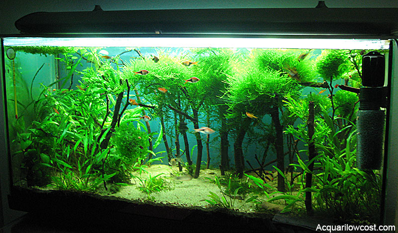 Bosco boschetto acquascape acquario 90 litri aquarium low cost for Acquario 90 litri