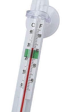 Temperatura ideale scalari for Temperatura acquario